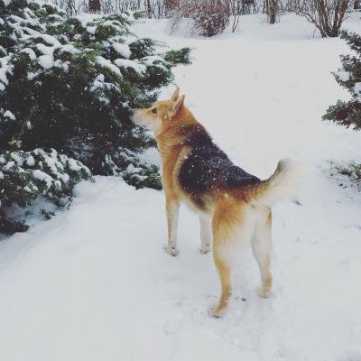 … ja idas tuli lumi maha.